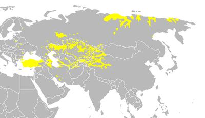 زبان ترکی چندمین زبان دنیاست